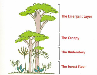 Worksheets Layers Of The Rainforest Worksheet task two rainforest 2 layers of the rainforest